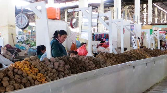 There are anything from around 3-5000 varieties of potatoes in Peru (depending on which tour guide you listen to!)