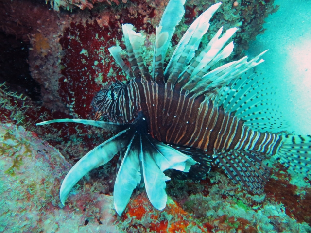The lion fish (which has poisonous spikes)